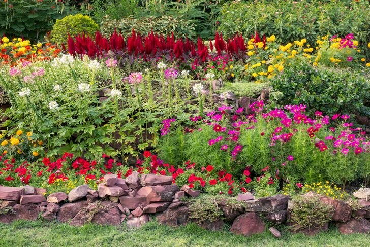 flower garden with lots of different flowers