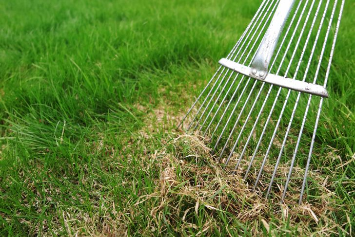 close up of a rake dethatching a lawn in spring