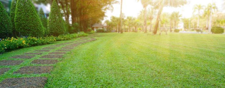 Springtime Lawn Tips for Your Yard