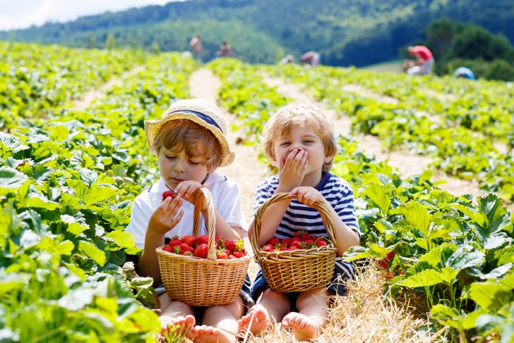 two little boys eating strawberries in the field