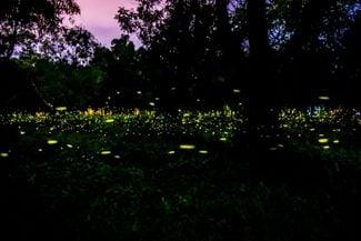Attracting Fireflies: Making New Backyard Friends