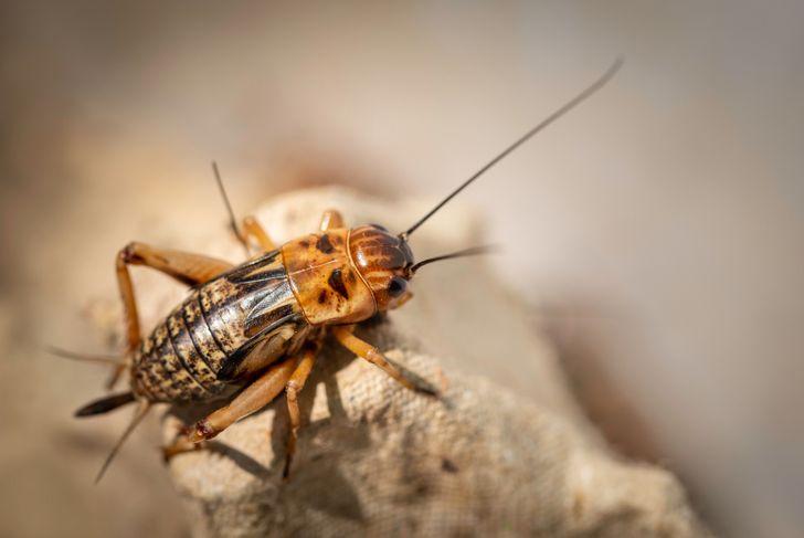 close up of a cricket on an egg carton