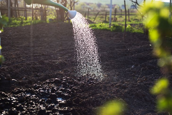 watering soil in newly planted garden
