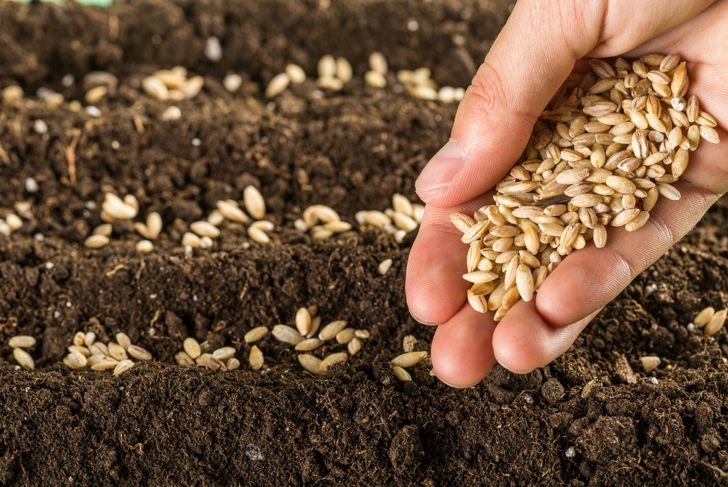 woman's hand planting lots of seeds in the ground