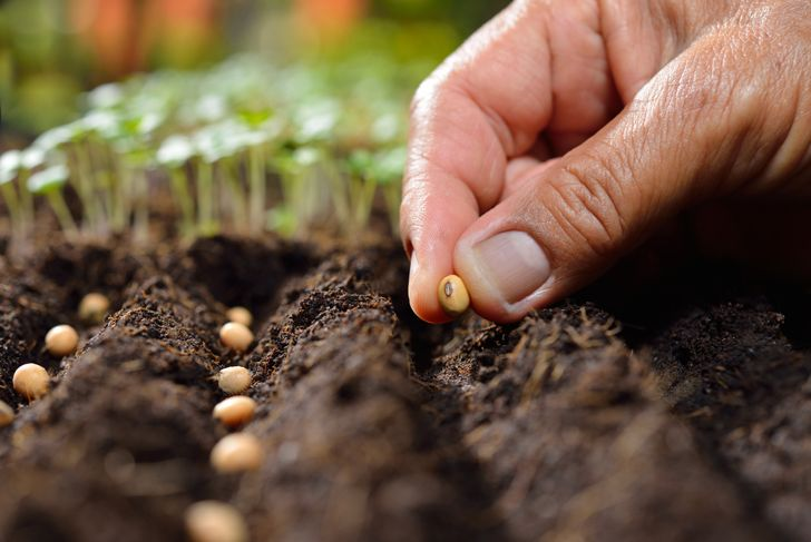 close up of man planting seeds in garden