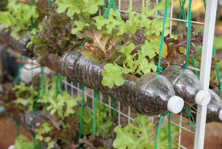 plastic bottles reused for planters in garden