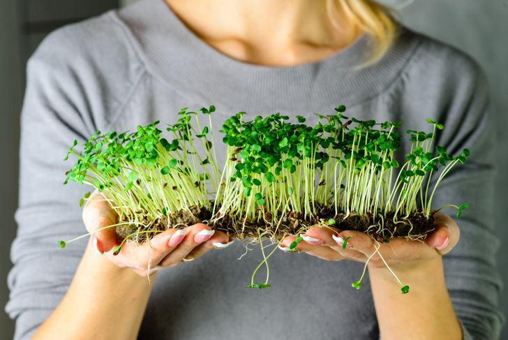 woman holding microgreens in her hands
