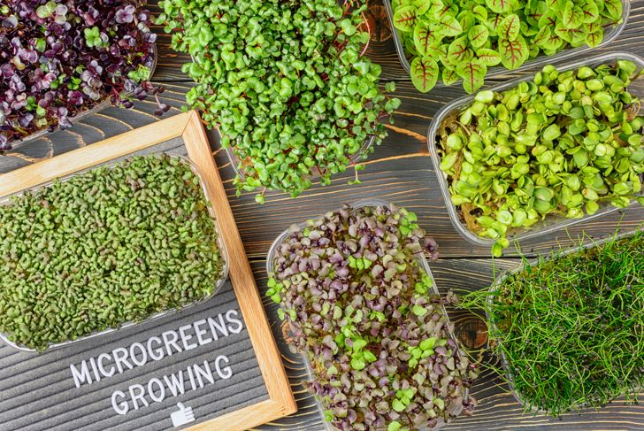 different types of microgreens on a table
