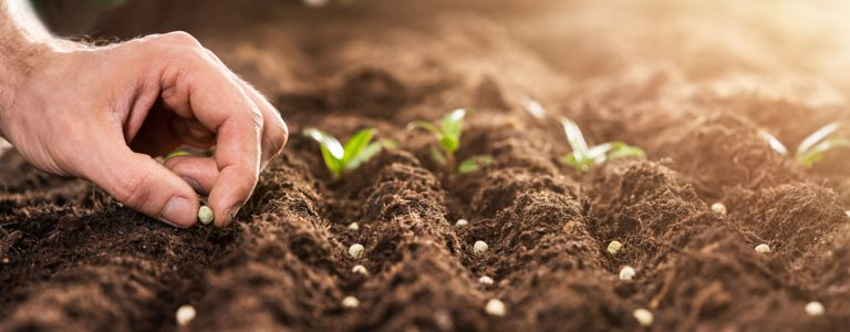 The Trick to Starting Plants From Seed