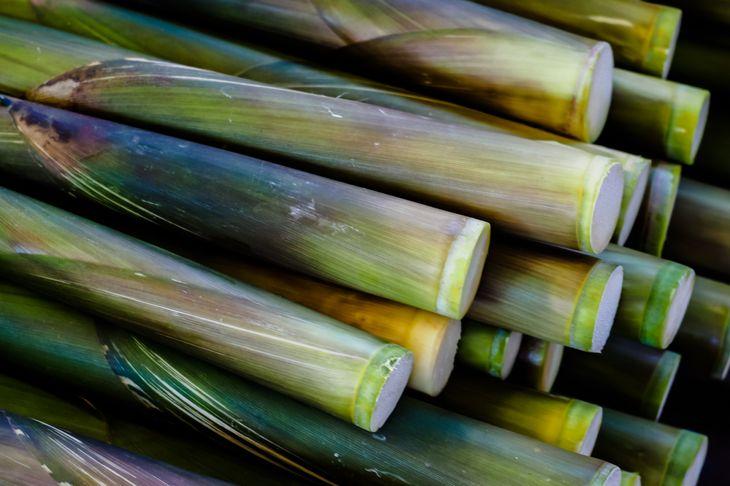 cut stalks of bamboo plant