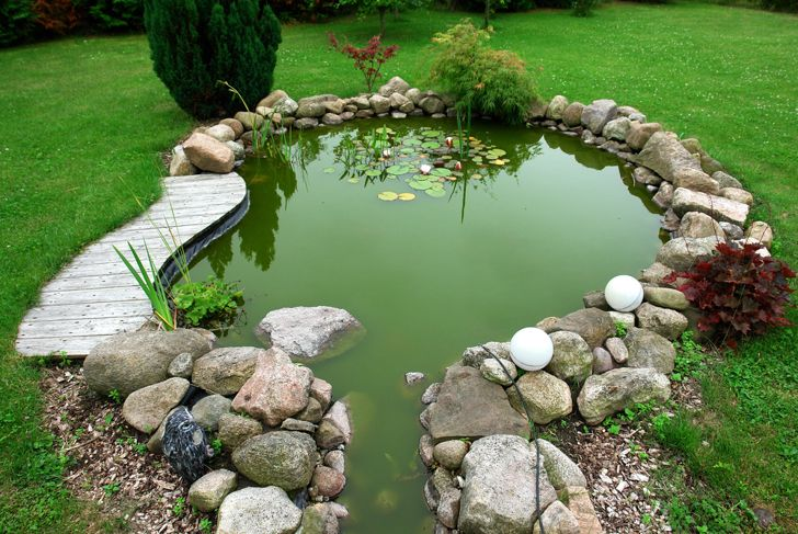pond that is green with algae