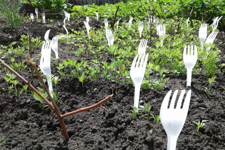 plastic forks in garden