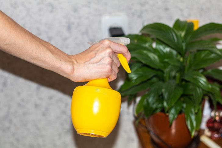 woman spraying houseplant with homemade pesticide