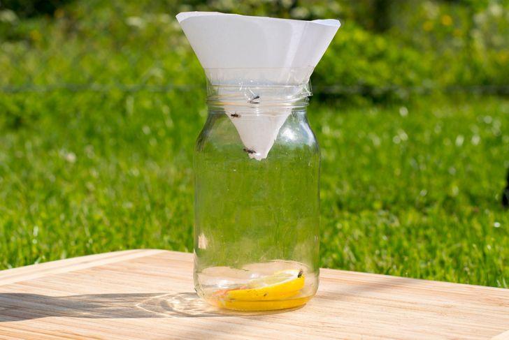 jar to catch fruit flies